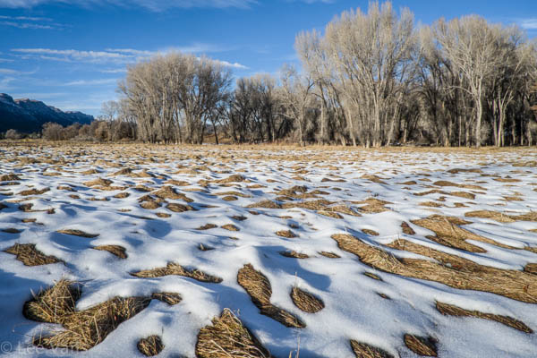 patchy snow covered meadow