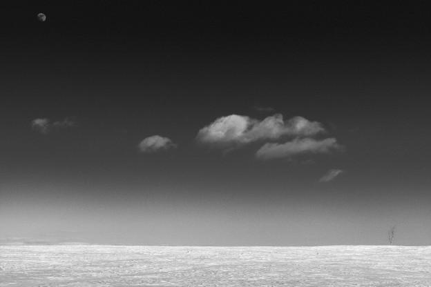 Scalia Sky