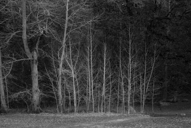 Trees-023