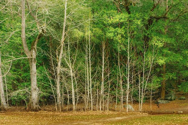 Trees-032